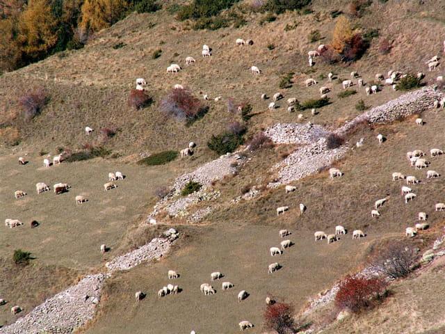 1 mouton 2 moutons ...zzz
