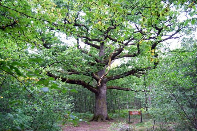 Les arbres en général - Page 2 1125362