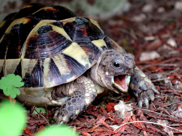 Les tortues. 1146085