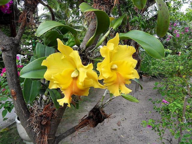 Les Orchidées - Page 6 1463082