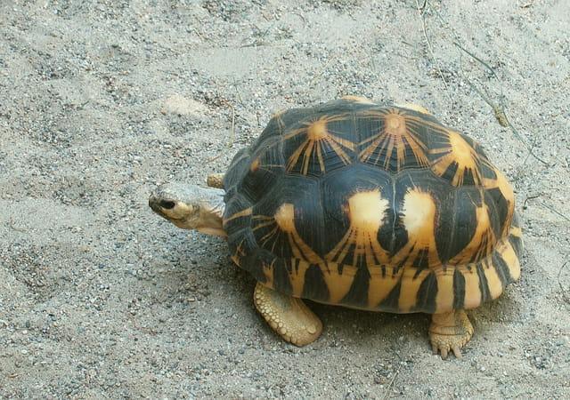 Les tortues. 1229664