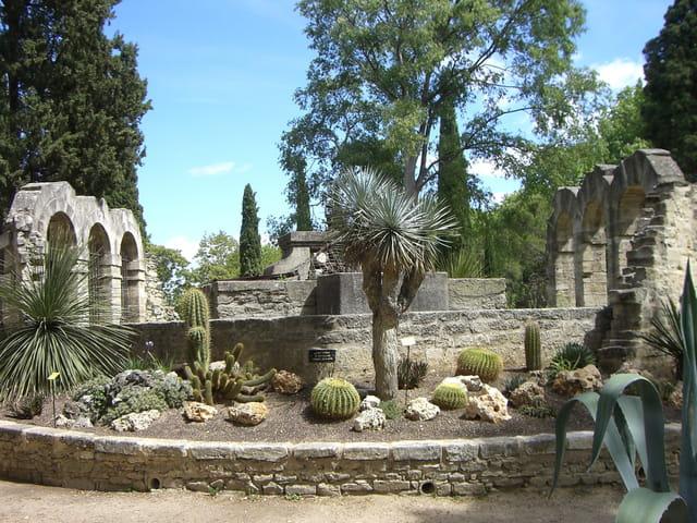 Jardin botanique de montpellier guide de voyage tourisme - Jardin suspendu brussels montpellier ...