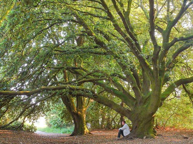 Les arbres en général - Page 2 1285954