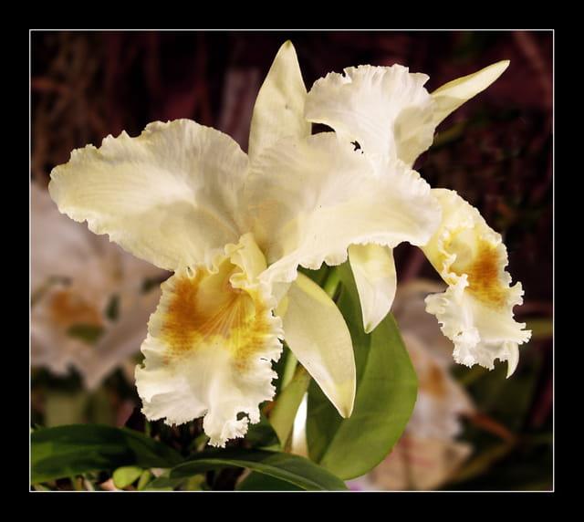 Les Orchidées - Page 6 1408580