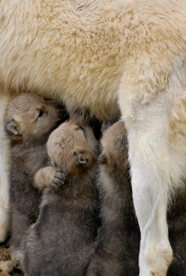 """Les bébés """"Animaux"""" 1309377"""