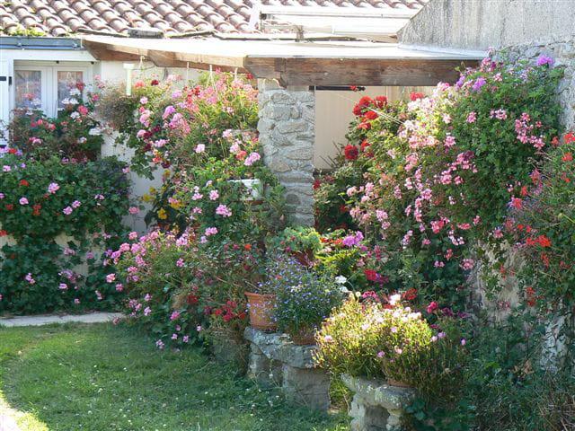 Beau petit jardin par jan brouwer sur l 39 internaute for Avoir des poules dans un petit jardin