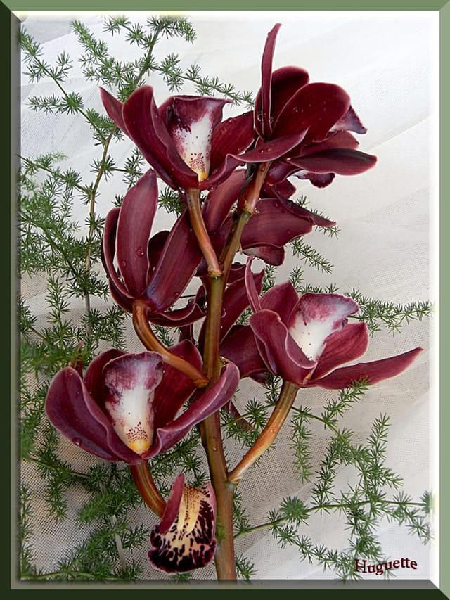 Les Orchidées - Page 6 1580951
