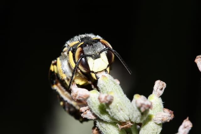 Les abeilles. 1582196