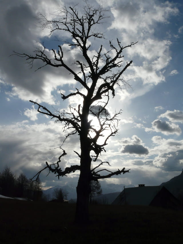 Les arbres en général - Page 2 1196774