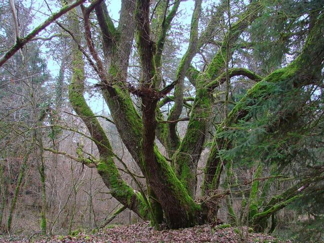 Les arbres en général - Page 2 1450943