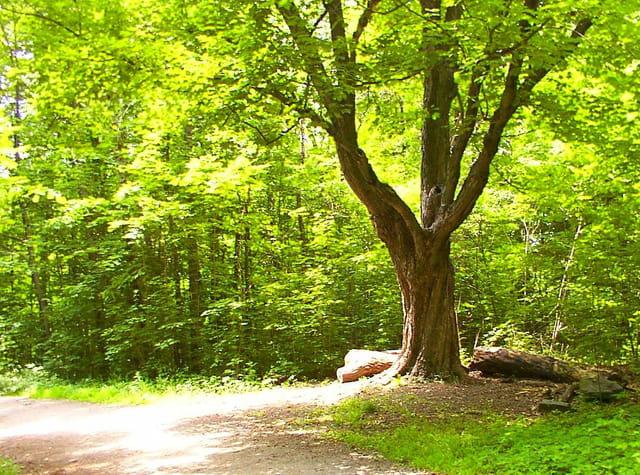 Les arbres en général - Page 2 1072714