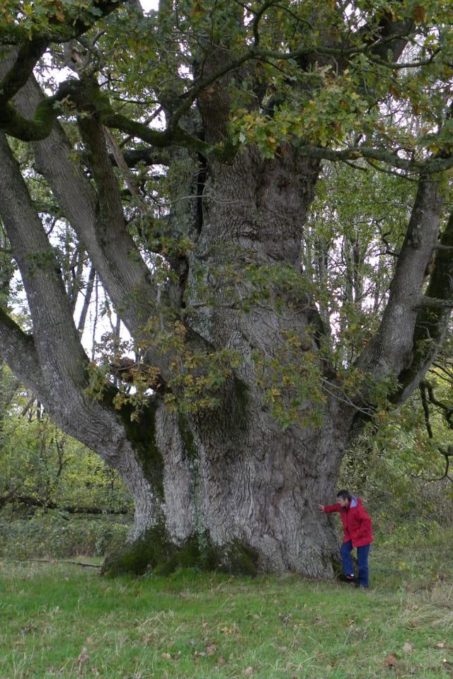 Les arbres en général - Page 2 1433679