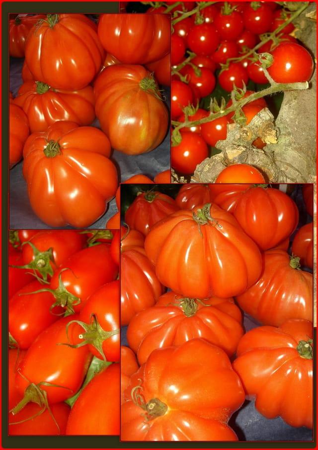 La tomate 1426472