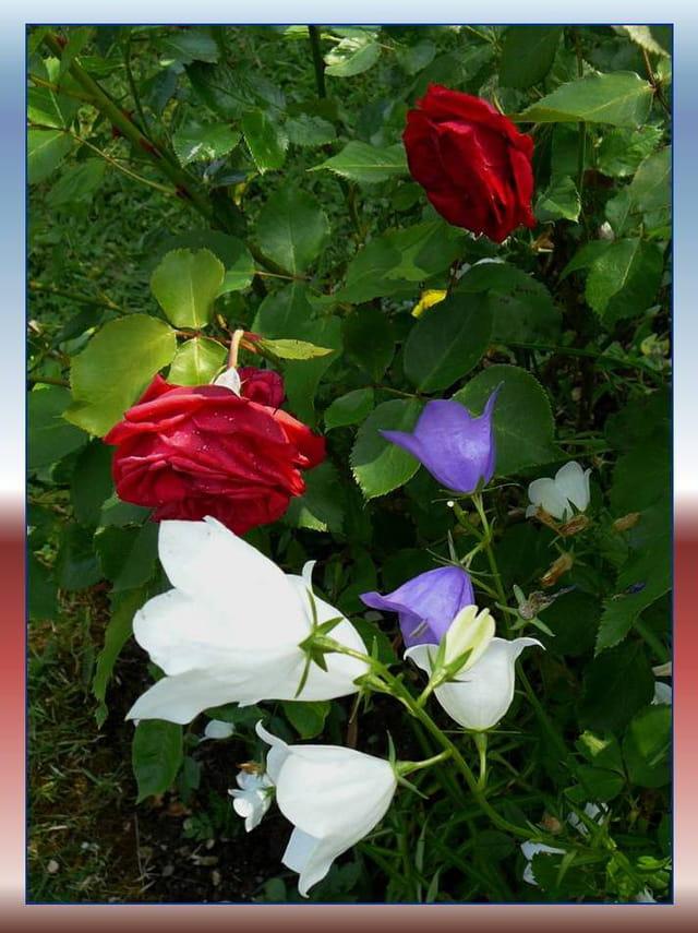 Des fleurs aux couleurs de la france par jacqueline dubois for France fleurs