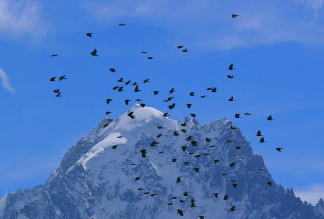 Paysages de montagne. 1174515