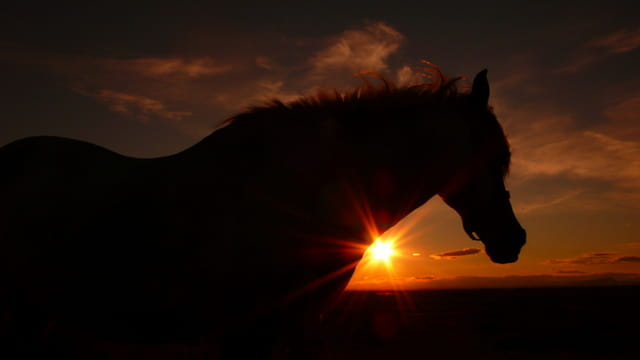 photo cheval coucher de soleil
