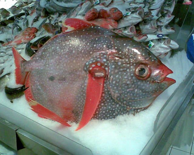 les poissons d'Okinawa dans images 1111914