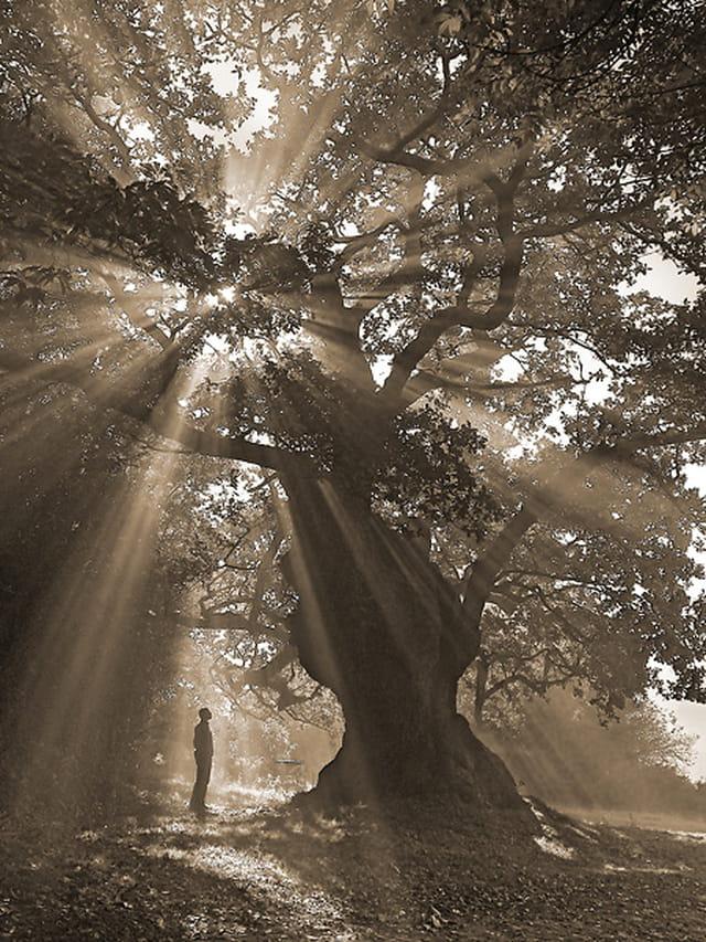 Les arbres en général - Page 2 1351112