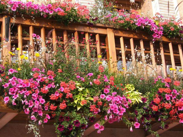 balcon fleuri par mireille ilhe sur l 39 internaute. Black Bedroom Furniture Sets. Home Design Ideas