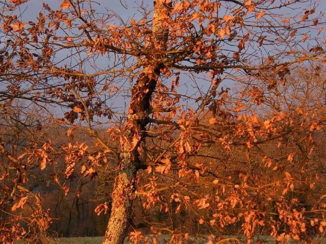 Les arbres en général - Page 2 1276147