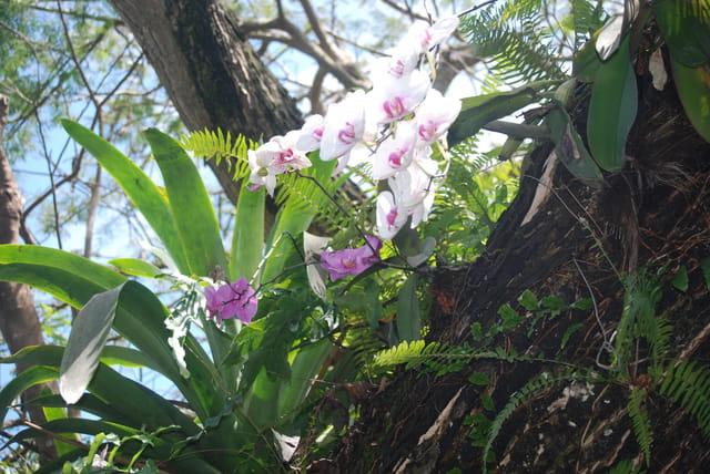 Les Orchidées - Page 6 1471405