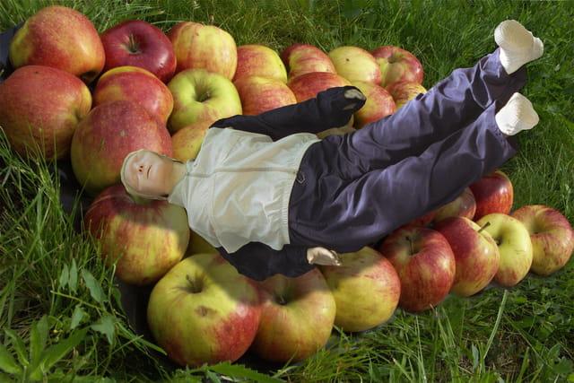 Tomber dans les pommes par andre garnier sur l 39 internaute - Personne qui repare les cheminees ...