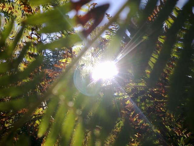 Le soleil 1574876