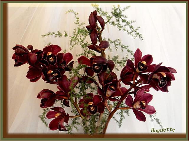 Les Orchidées - Page 6 1464366