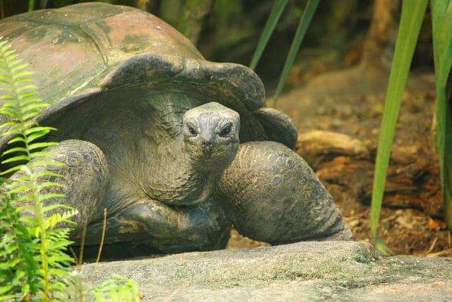 Les tortues. 1470088