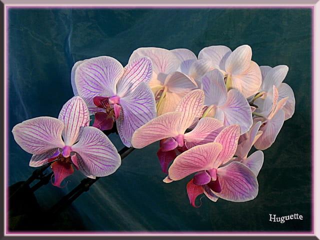 Les Orchidées - Page 6 1589506