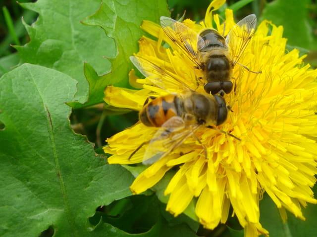 Fleur et son employée