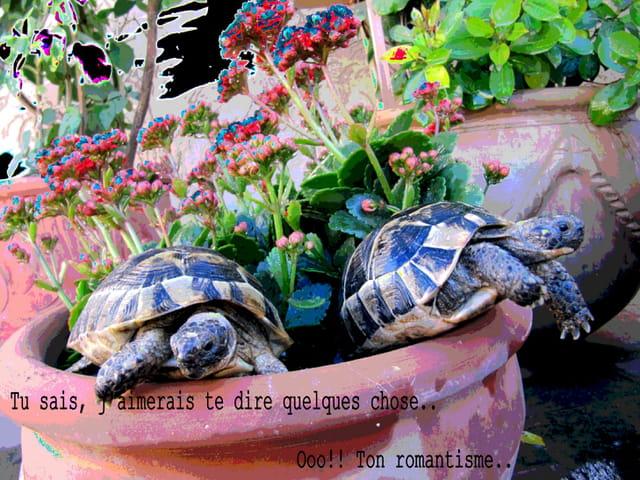 Les tortues. 1603326