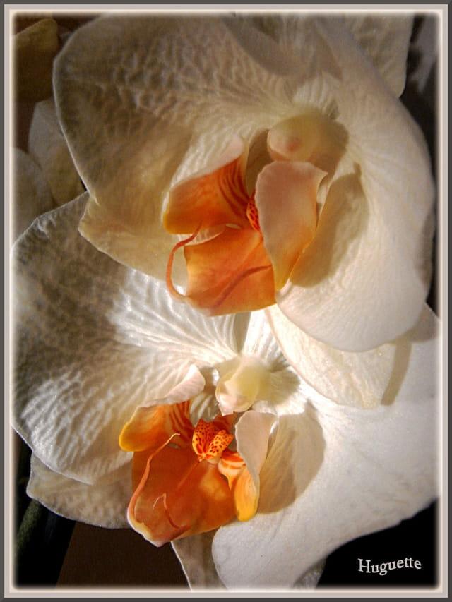 Les Orchidées - Page 6 1579646
