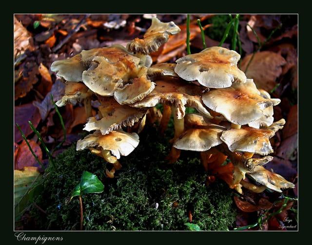 Les champignons - Page 3 1584966