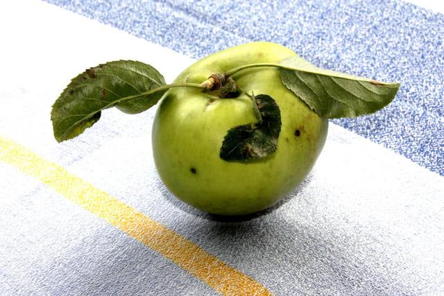 La pomme 1588660