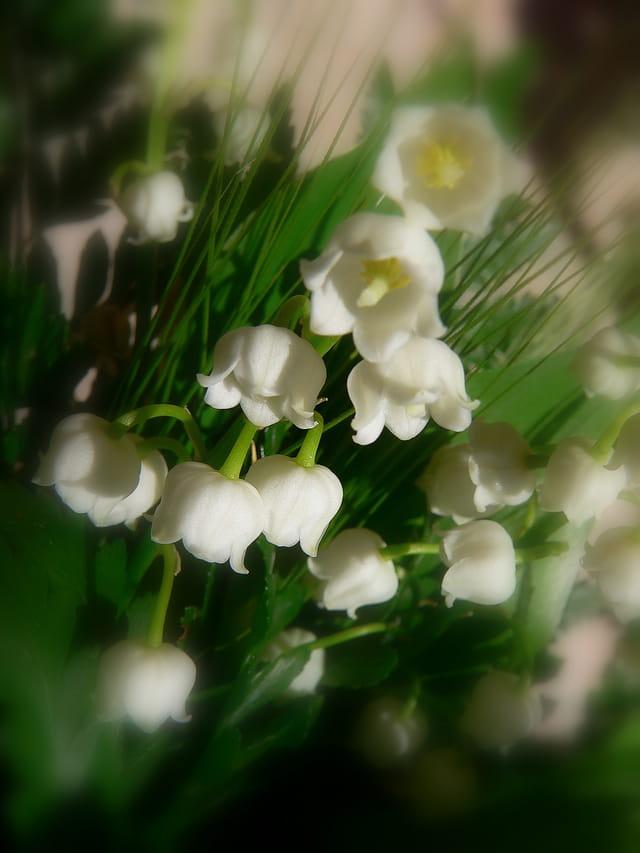 1er mai, des souhaits de bonheur