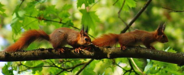 2 ecureuils