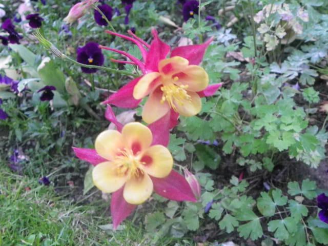 2 jolies fleurs par isabelle taras sur l 39 internaute. Black Bedroom Furniture Sets. Home Design Ideas