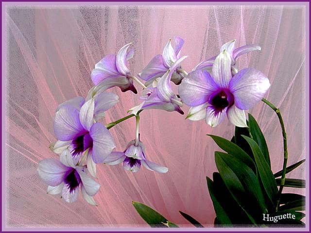 Les Orchidées - Page 6 1575611