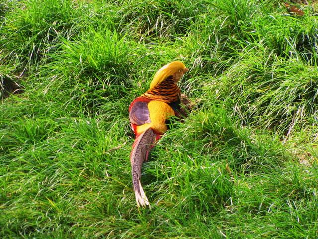 Oiseau aux couleurs vives par jean marc puech sur l for Oiseau par la couleur