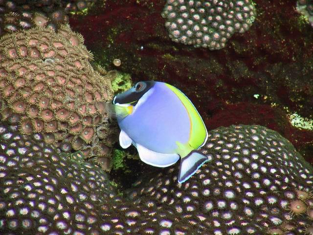 Accessoires aquariophilie for Vpc aquariophilie