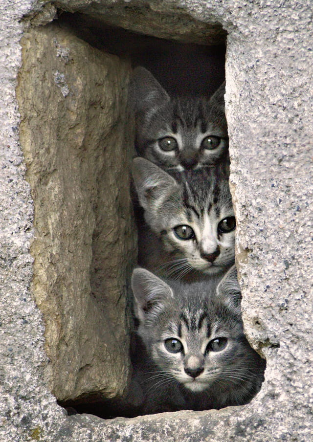 3 petits chats curieux
