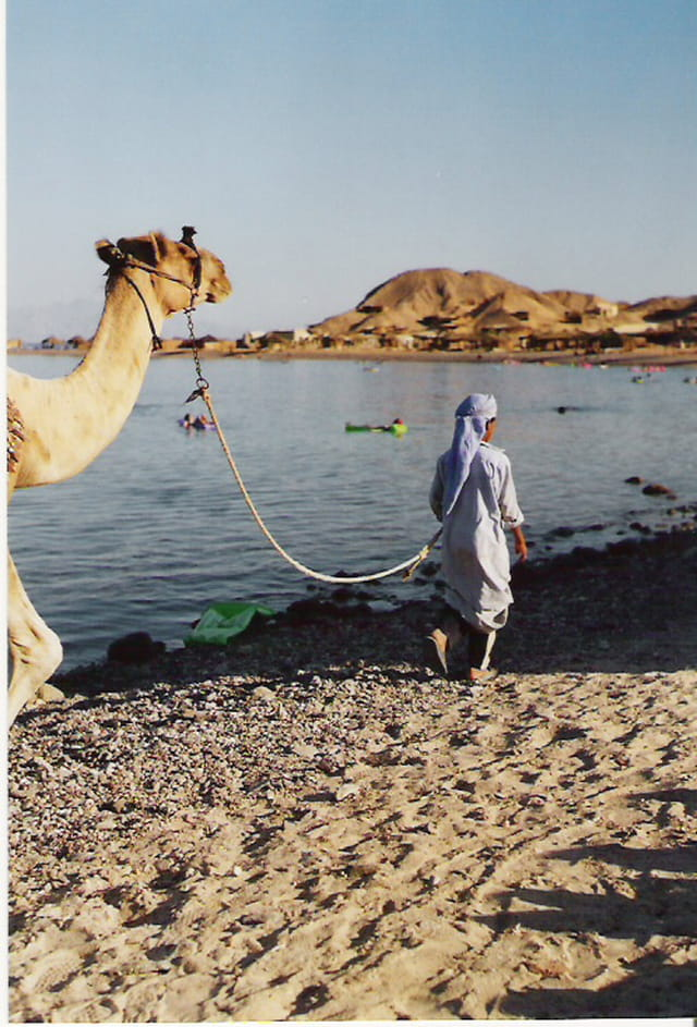 Photos d'Egypte 352580
