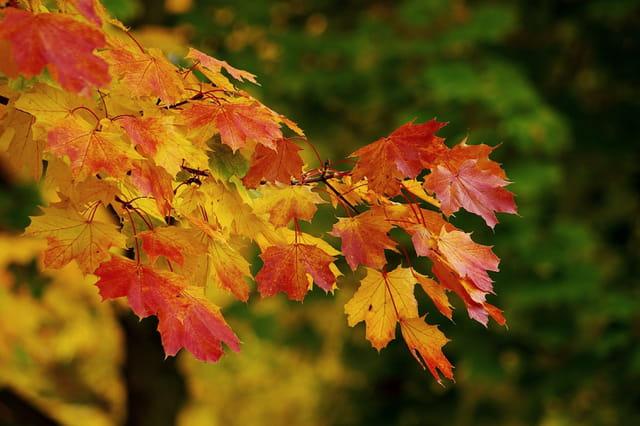 3 couleurs d'automne