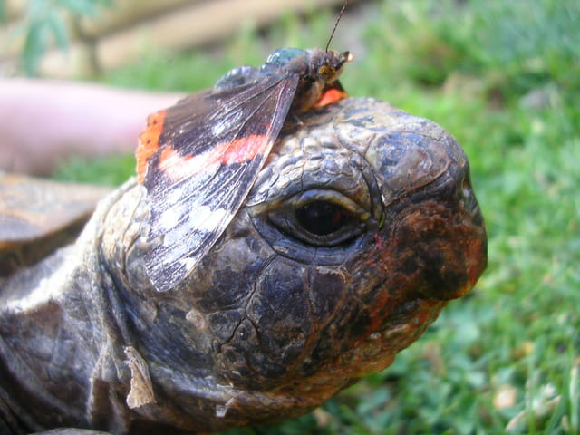 Les tortues. 925076