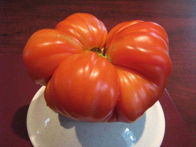 tomate coeur de boeuf par nicole laporte sur l 39 internaute. Black Bedroom Furniture Sets. Home Design Ideas