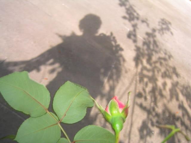 A l'ombre des jeunes filles en fleur