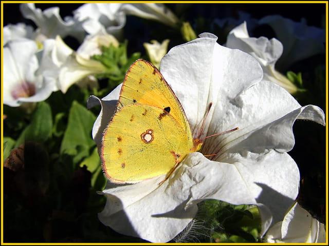 A la recherche du nectar