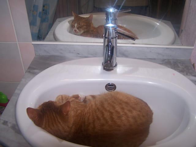 Abricot dans le lavabo