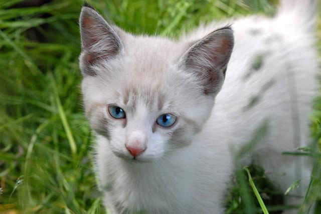 Achille bébé chat